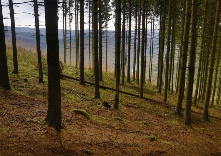 Nowinki technologiczne w edukacji leśnej